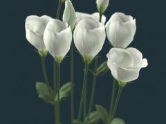 spirit_flower_fix